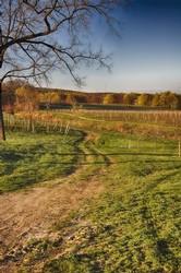 Johnson Estate Vineyards - West Ridge & Chardonnay