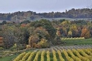 Johnson Estate Winery autumn vineyard